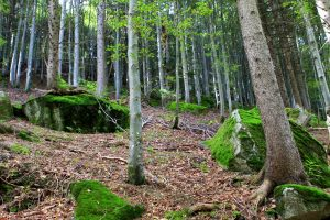 Bäume und Steine im Wald